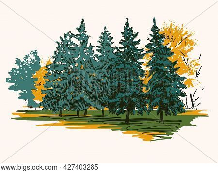 Autumn Landscape With Coniferous Forest.  Hand-drawn Illustration. Vector.