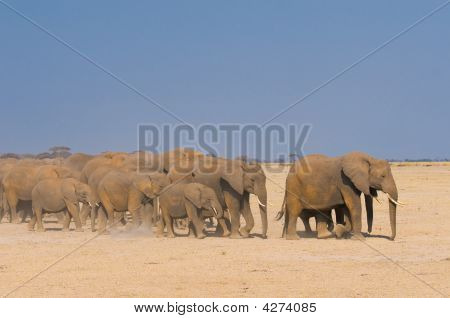 poster of elephants in amboseli national park kenya africa