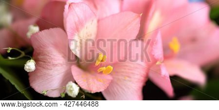 Festive Bouquet Of Assorted Flowers Including Pink Alstroemeria