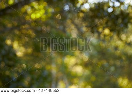 Green forest with blue sky bokeh background. Defocused and blur lens effect.