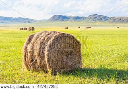 A Bale Of Hay On A Mown Green Field On A Sunny Day. Summer Rural Landscape In Khakassia, Russia