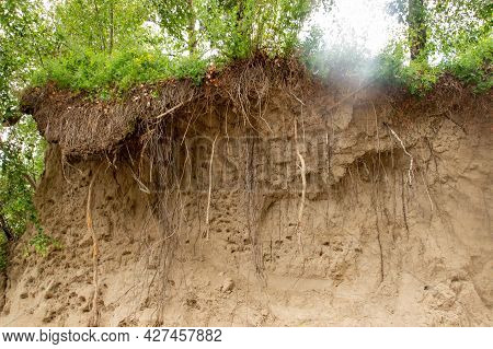 Trees Grow On The Edge Of The Cliff. Hanging Tree Roots Exposed By Landslide And Soil Crumbling. Geo