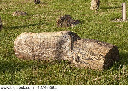 Badlands National Park, Sd, Usa - June 1, 2008: Closeup Of Brown Petrified Tree Trunk Lying On Grass