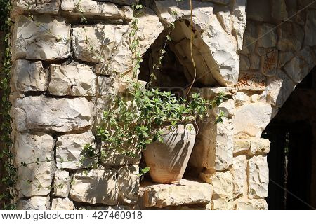 Green Plants And Flowers Grow In A Flower Pot In A City Park In Israel