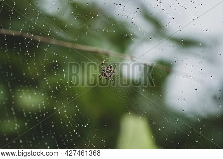 Picture Of Water Droplets Trapped In The Spider Web Of Neoscona Mukheerjee
