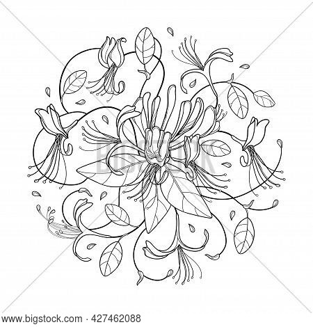 Vector Round Bunch Of Outline Lonicera Or Japanese Honeysuckle With Flower, Bud And Leaf In Black Is