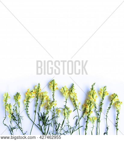 A Summer Bouquet In A Rustic Style With Yellow Snapdragon Flowers On A White Background. Background