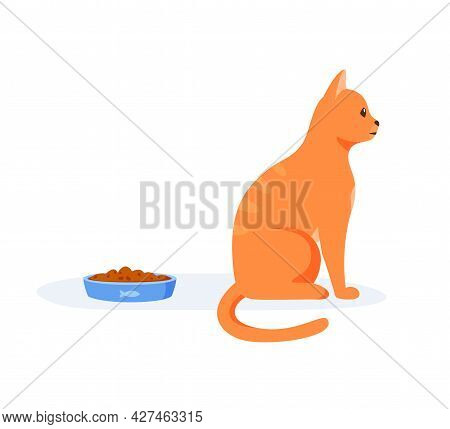 Picky Cat Refusing To Eat Food In Bowl. Red Domestic Cat Being Selective And Persnickety. Pet Not Ea