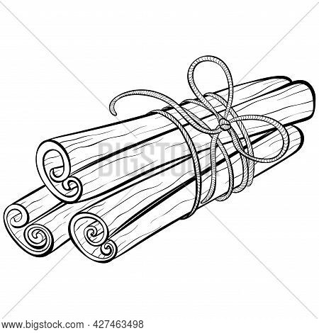 Cinnamon Sticks Tied With Rope. Hand Drawn Vector Illustration In Sketch Style Isolated On White. Co