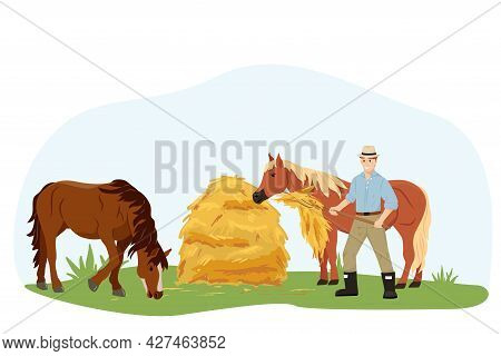The Man Takes Care Of His Beloved Horses, Gives Them Hay. Two Horses Eat Hay At The Farm. Country Pe