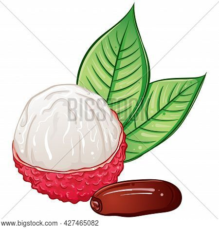 Tropical Peeled Lychee Fruit Whole With Seed, Leaves. Bright Colorful Hand Drawn Vector Illustration