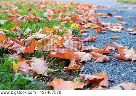 Autumn Maple Leaves Fallen On The Ground. Dry Fall Leaves On Grass And Road