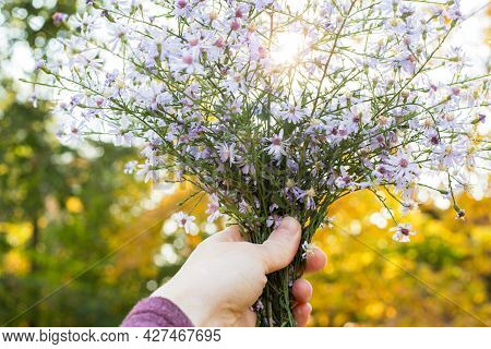 Bouquet Of Wild Flowers In Woman's Hand With Blurred Background And Sunshine In Fall