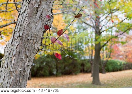 Autumn In The Park. Fallen Leaves Near Trees In Fall.