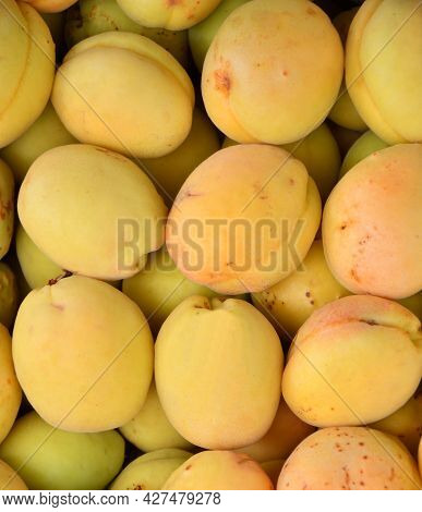 Ripe Apricots Of The New Harvest