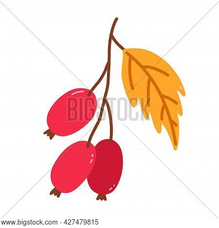 Sprig With Rose Hips And Leaves Isolated On White Background. Vector Hand-drawn Illustration In Cart