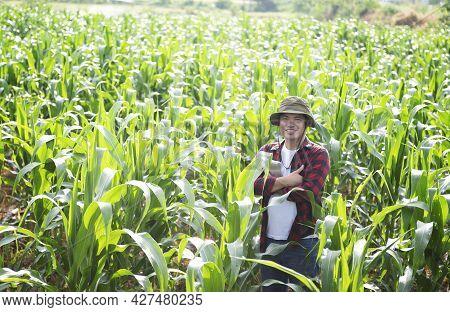 Young Asian Farmer Inspecting Fresh Sugarcane Leaves In Organic Farm