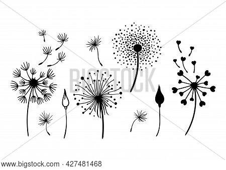 Dandelion Black And White Clipart Bundle, Elegant Summer Wild Flowers Set, Botanical Floral Isolated
