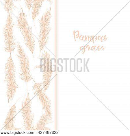 Dry Pampas Grass Seamless Border. Boho-style Decor. Vector Hand Drawn Illustration.
