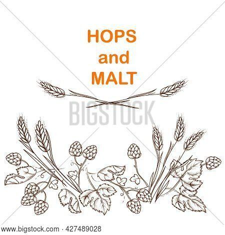 Malt T And Hops Beer Banner Design With Plant Elements In Vintage Engraving Style. Hand Drawn Image