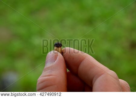Man Holds In His Fingers The Smallest Mushroom. Due To Its Size, It Resembles A Small Baby. They Beg