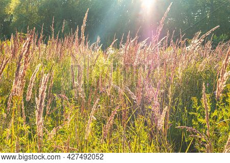 The Beautiful Picture Of The Grass In The Field With The Trees On The Backside And Sunbeams. Selecti