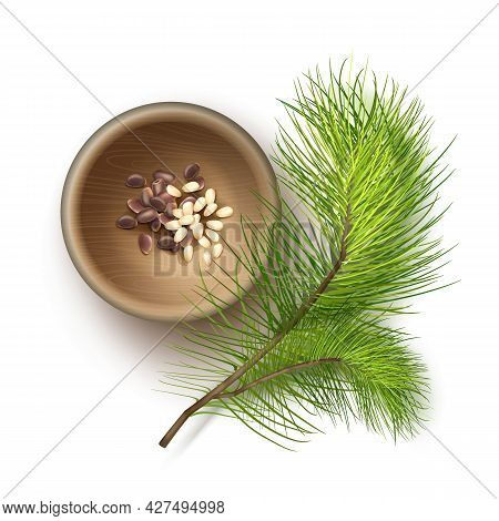 Vector Realistic Pile Of Unshelled And Shelled Pine Nuts In Wooden Bowl With Cedar Branch Close Up T