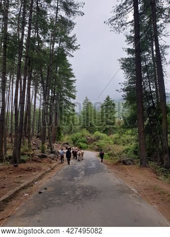 Paro, Bhutan - May 03, 2019: Local Villagers With Their Horses Walking Up The Road In The Himalayas