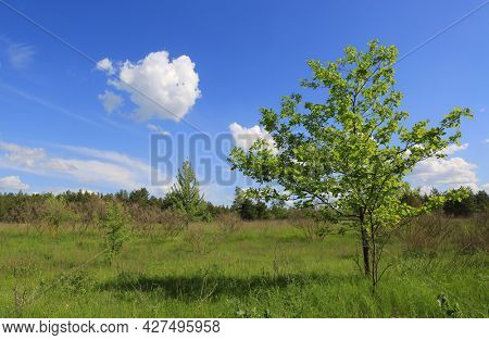 Summer landscape with green tree on meadow under blue sky with nice white clouds