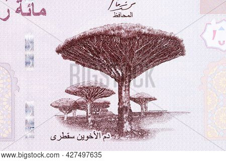 Dracaena - Endemic Trees Of Socotra From Yemeni Rial