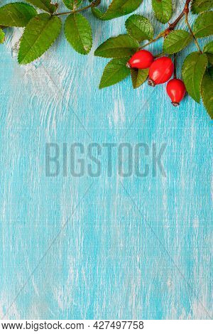 Hip Roses On Blue Background. Mock Up. Copy Space. Close Up