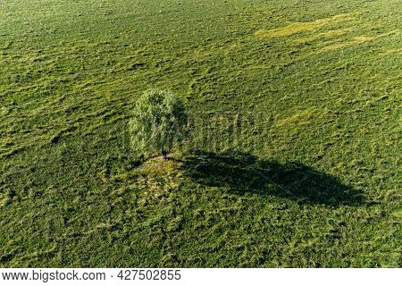 Aerial View Of A Lonely Tree Casting A Long Shadow In The Middle Of A Green Field