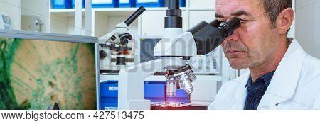 scientist examines biopsy samples in lab