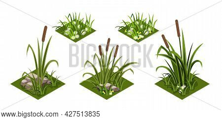 Reeds And Grass Isomatric. Green Grass With Chamomiles Flowers, Rover Reeds And Rocks. Isolated Tile