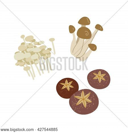 Mushrooms In Asian Cooking - Eringi, Enoki, Shiitake, Enokitake. Collection Of Mushrooms For Menu De