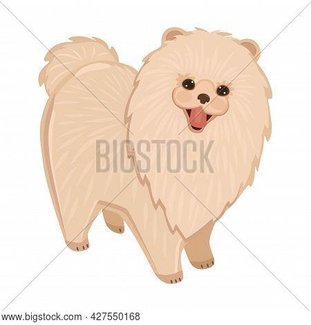 Realistic White Dog Spitz Breed Sitting On A White Background - Vector Illustration