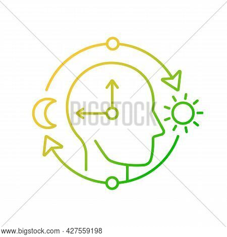 Circadian Rhythms Gradient Linear Vector Icon. Internal Daily Clock. Optimize Cognitive Function For