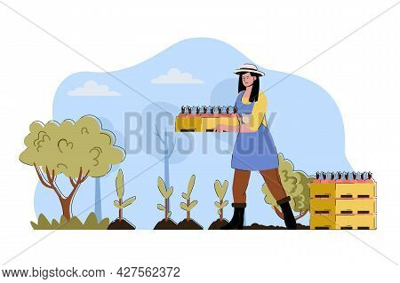 Fruit Planting Concept. Woman Holding Box Of Seedlings And Planting Fruit Tree Situation. Gardening,