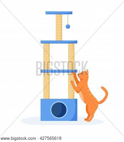 Cat Tree Or House With Scratching Posts. Cute Red Cat Interested In Cat Tower, Cats Playground