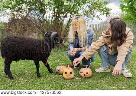 Teenage Teenagers And Black Domestic Ram With Halloween Pumpkins On Grass
