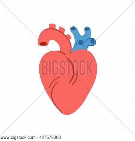 Simple Cartoon Anatomical Heart, Isolated On White Background. Hand Drawn Vector Illustration.