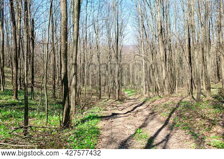 Footpath In The Spring Forest . Springtime Woodland
