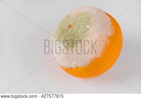 Orange Covered With White And Green Mold Isolated On White Background.