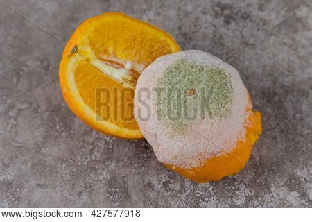 Cut Mouldy Orange With White And Green Mold On Table.