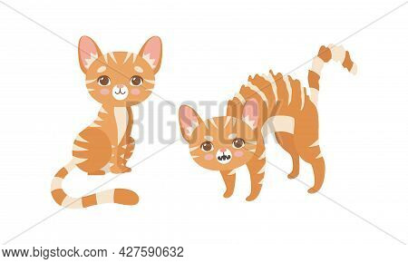 Cute Ginger Striped Kitten As Furry Domestic Pet Growling And Sitting Vector Set