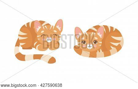 Cute Ginger Striped Kitten As Furry Domestic Pet Cuddling And Nestling Vector Set