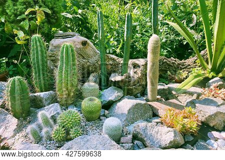 Rockery In The Garden With Stones And Variety Of Different Flowers And Green Plants. Landscape Desig