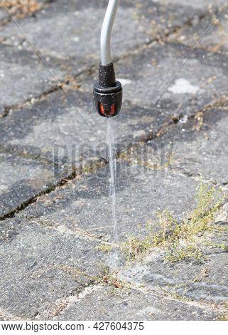 Spraying Pesticide With Portable Sprayer To Eradicate Garden Weeds