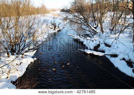 winter river. Duck
