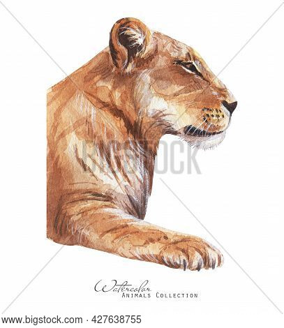 Lioness Profile Portrait. Lion Watercolor Hand Drawn Illustration